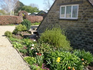 Tulips in the front garden