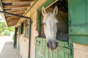 Manton Lodge stables and horse