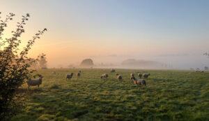 Misty September sunrise